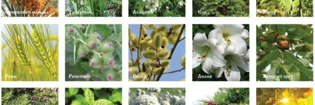 В Лефортово будет парк с растениями, упоминаемыми в Библии